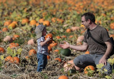 Little boy handing dad a pumpkin in pumpkin patch Sauvie Island