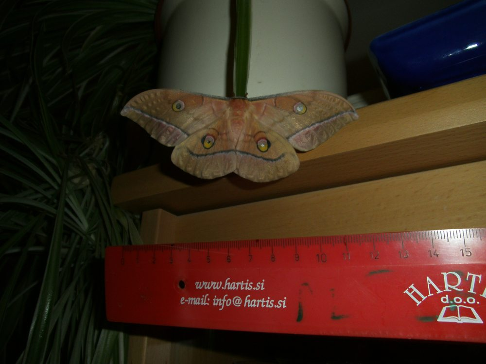 Antheraea yamamai -from silk to Mach number (6/6)