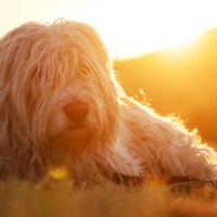 Sundown Doggie Portrait