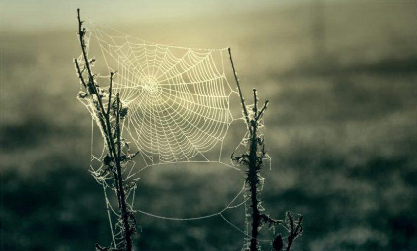 spider webs a halloween