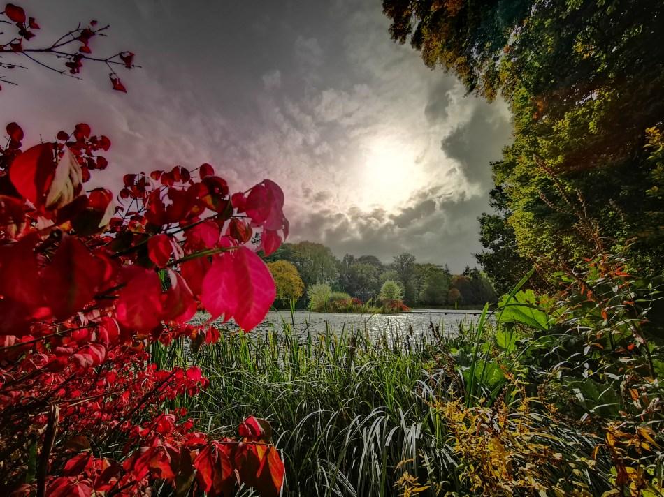 Jesień się pyszni czerwienią kolorów w Glansevern