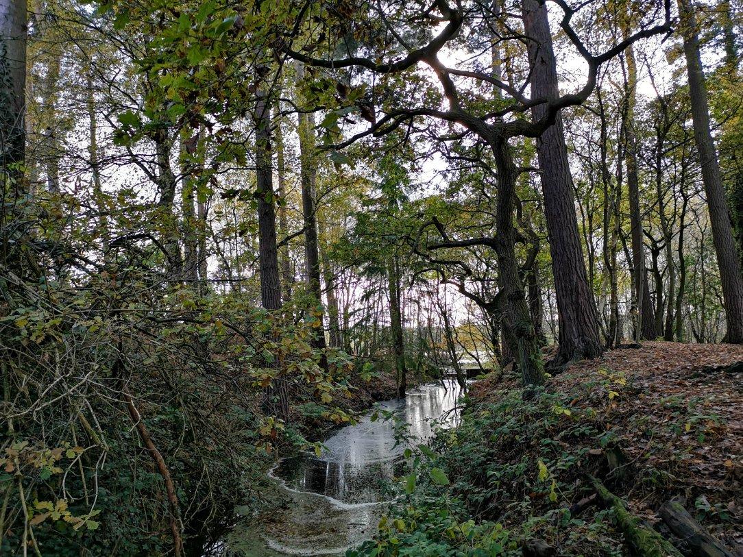 Idź na spacer do lasu