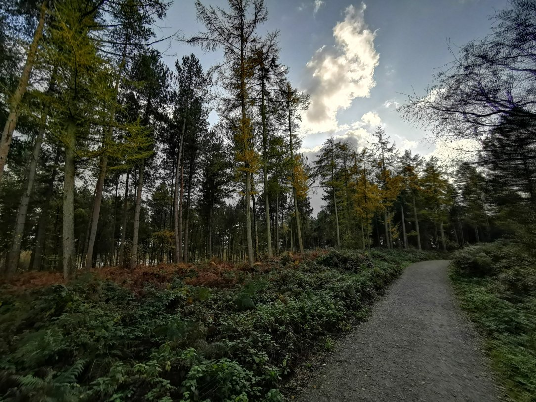 Cudowny Delamere Forest w Cheshire