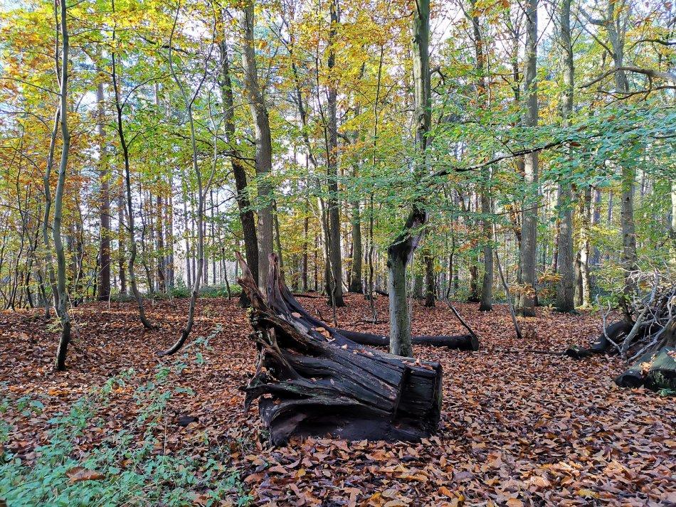 Idź na spacer do lasu żeby zobaczyć takie klimaty
