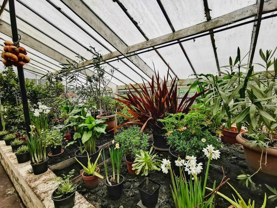mieszanina roślin w szklarni z Rode Hall