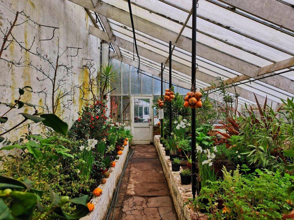malutka szklarnia w ogrodach rode hall