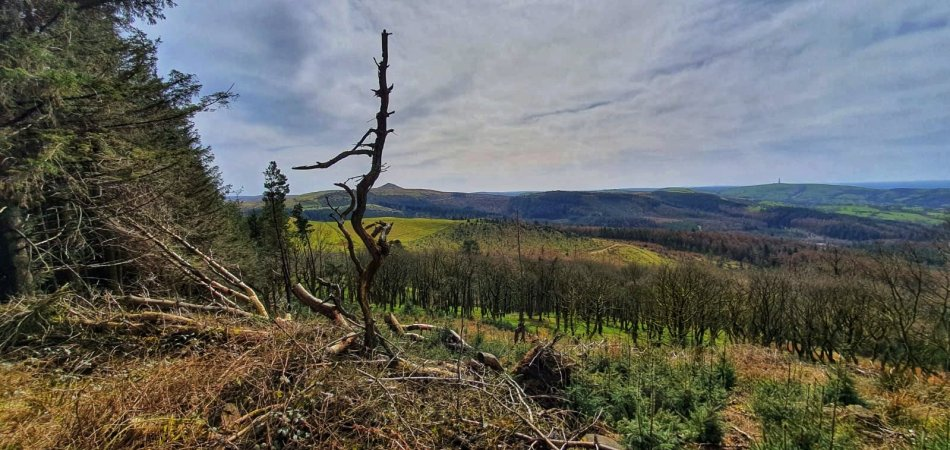 Macclesfield Forest - panorama Cheshire