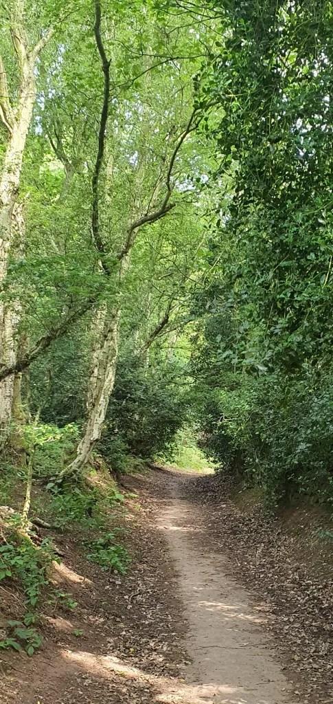 wędrówka Bickerton Hill i las