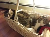 <3 kitty love