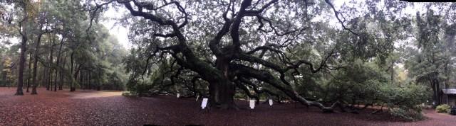 The Angel Tree Panoramic