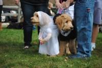Wordless Wednesday. Pet Halloween Costumes Gone Wild ...