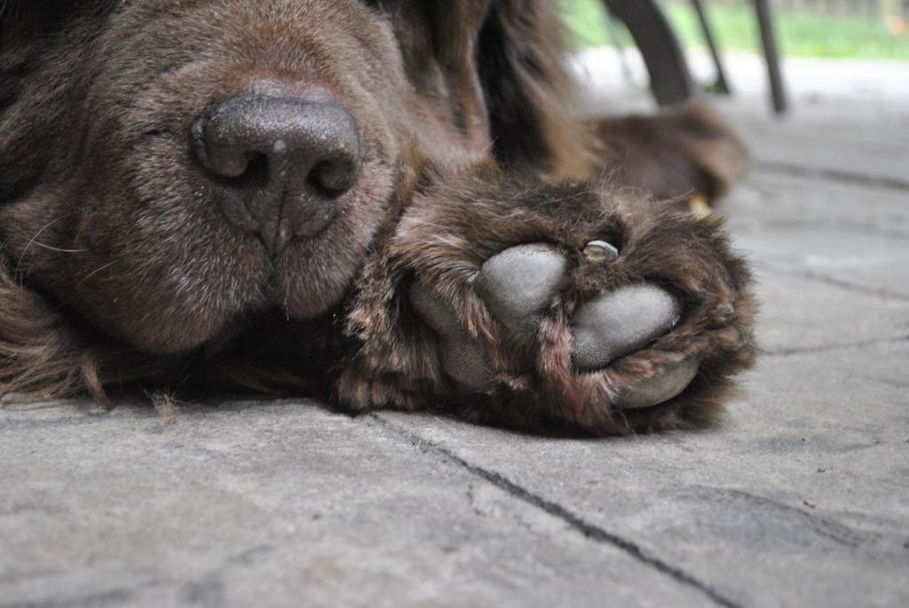 Homemade paw balm for dry, cracked dog paws