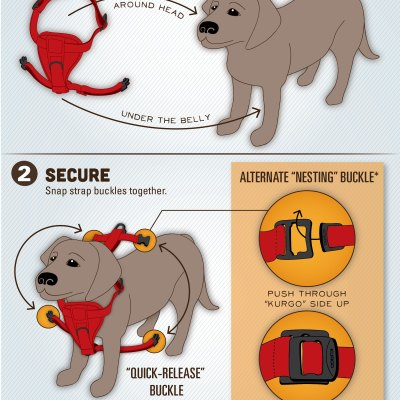How To Properly Put On A Dog Harness