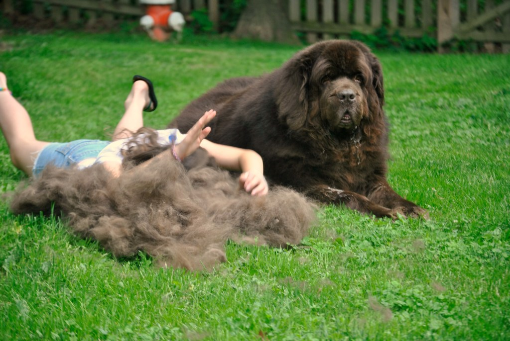 You Might Have A Newfoundland If........