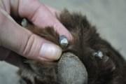 safely trim dog's black