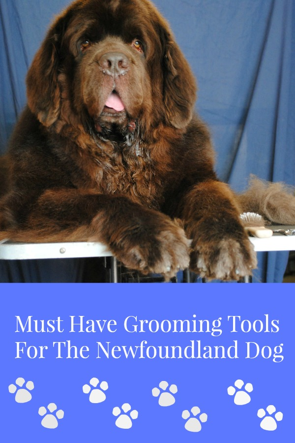 Excellent Grooming Tools For The Newfoundland Dog My Brown Newfies Home Interior And Landscaping Eliaenasavecom