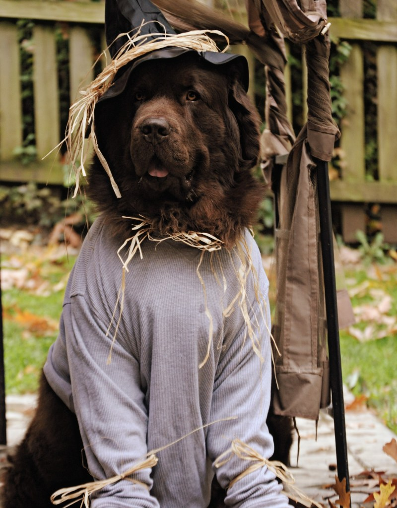 dog dressed up as the scarecrow from the wizard of oz