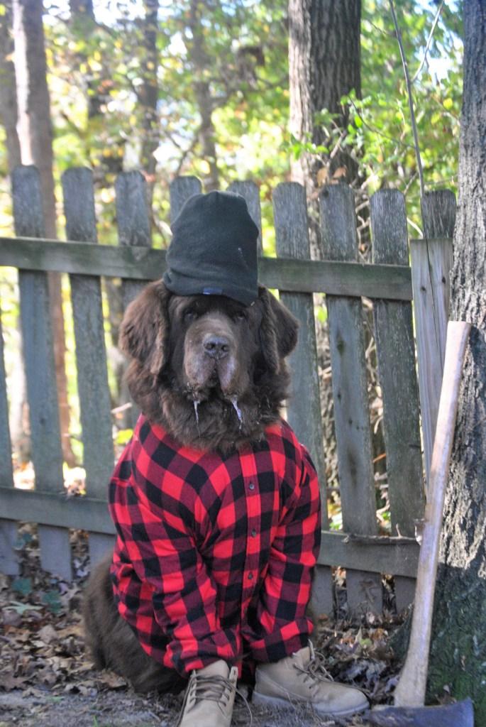 newfie dressed as lumberjack for halloween