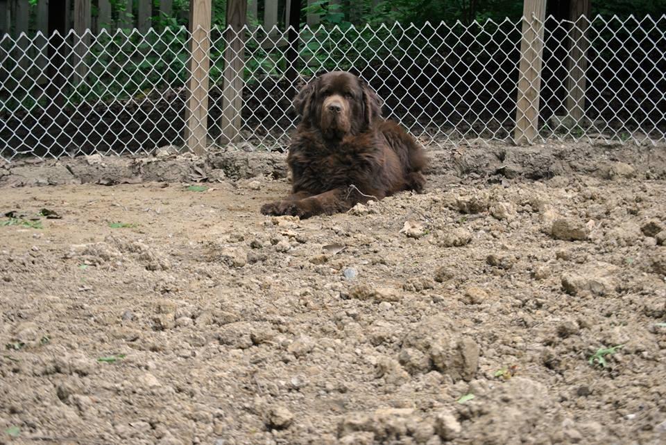 brown dog sitting in dirt