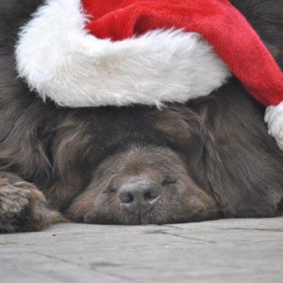 The Best Way To Spread Holiday Cheer Is Giving To Newfies Far And Near