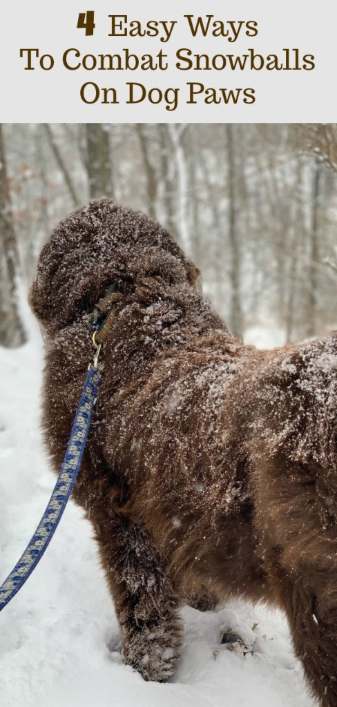 dog standing with snowballs on paws
