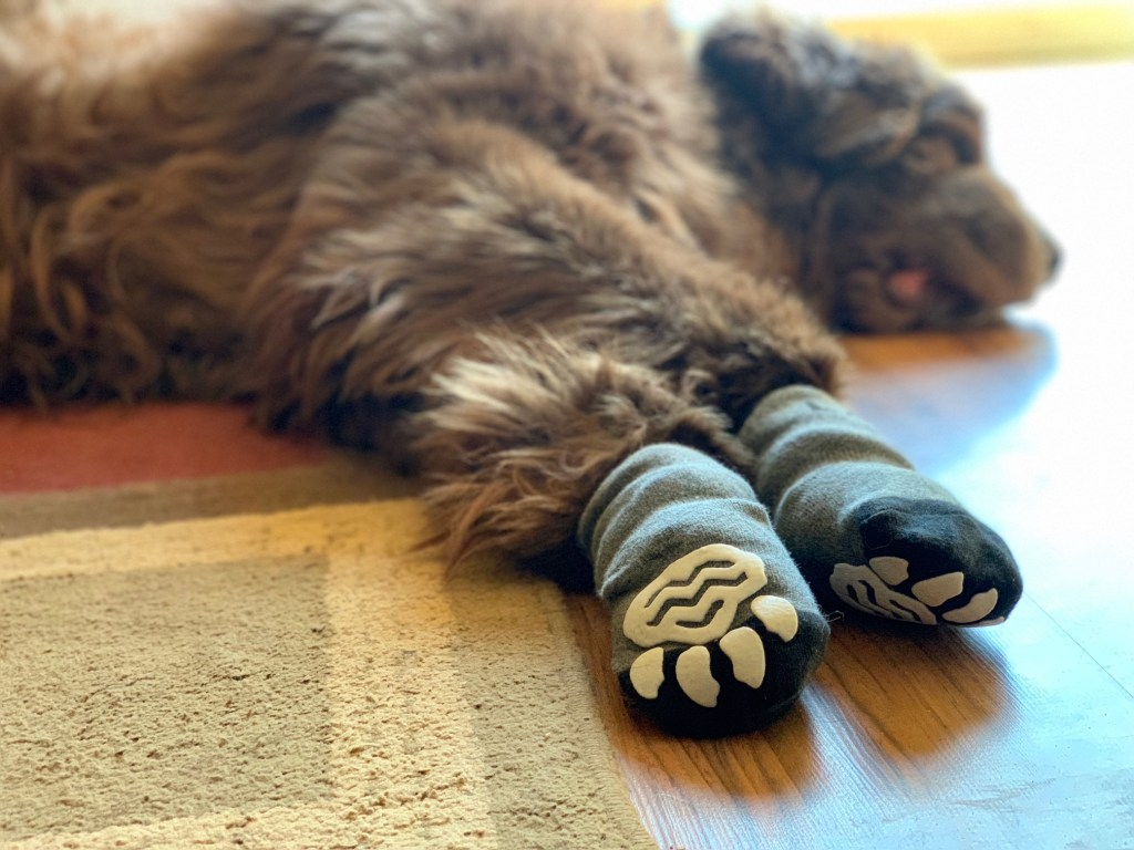 Do Non Slip Dog Socks Really Work My Brown Newfies