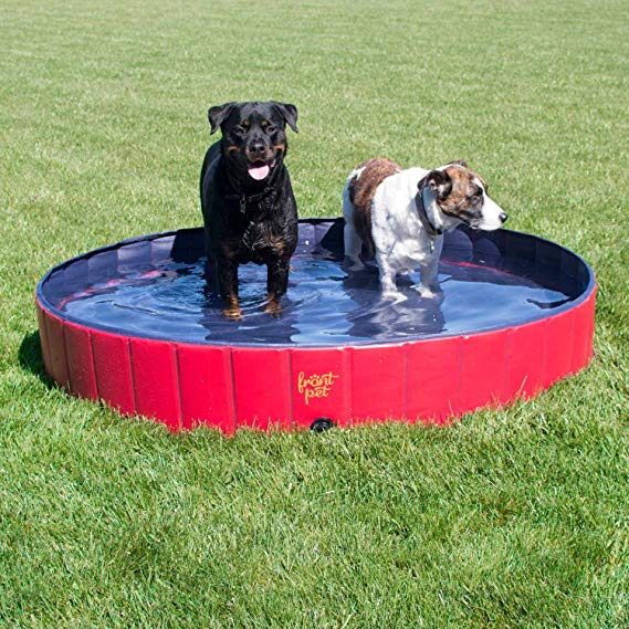 The Best Dog Pools For Summer Fun My Brown Newfies