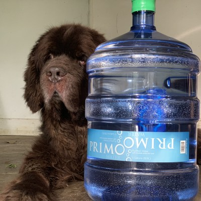 4 Easy Ways To Keep Dogs Hydrated In The Summer