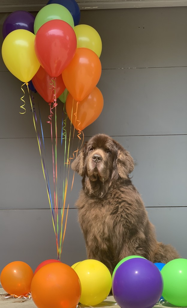 newfie celebrating 11th birthday