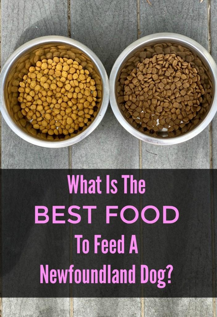 best diet for a newfoundland dog and newfoundland puppy