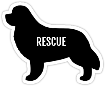 4 Ways To Help Newfoundland Dogs In Rescue Without Adopting