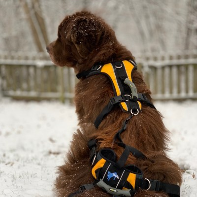 The Best Lifting Harness For A Newfoundland