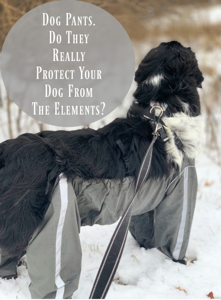 Dog pants can help protect your dog's coat and skin from rain, mud, slush and snow.