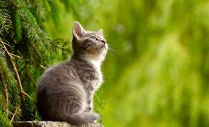 cbd-animaux-chat-1