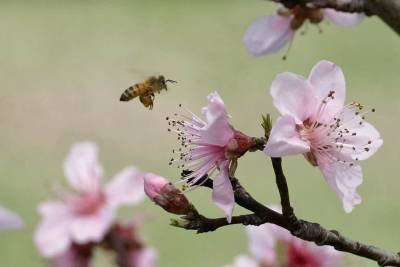 Plight of Bees @ Texas Agrilife Extension Service - Comal County | New Braunfels | Texas | United States