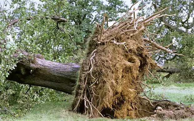 Downed tree.