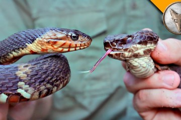 two snakes