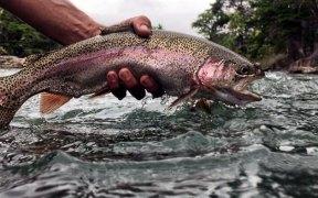 Reelfly fishing adventures
