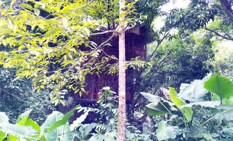 Durano Eco Farm and Spring Resort tree house