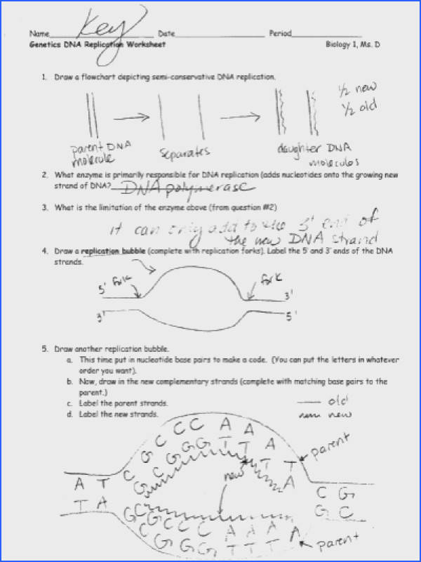 Worksheet 21 Dna Replication Answer Key - Nidecmege