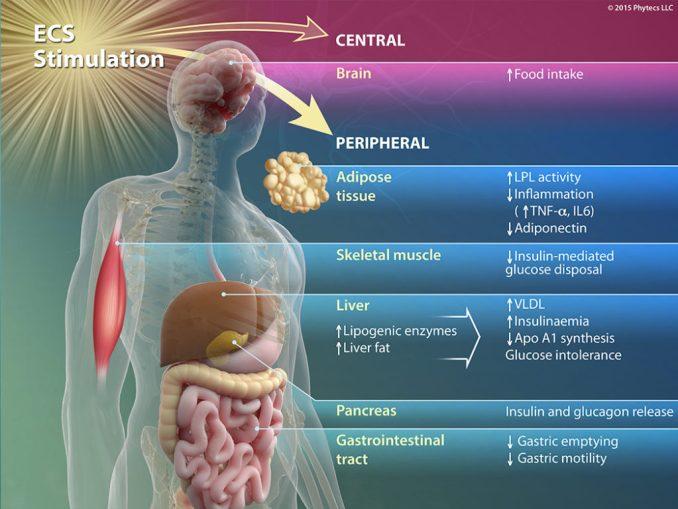 ECS Stimulation
