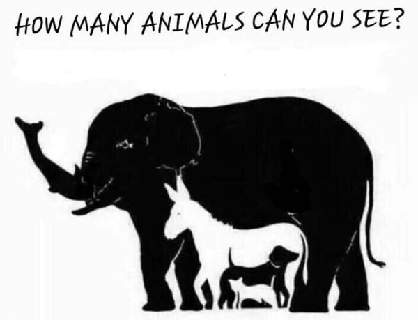 How Many Animals Can You See Whatsapp Puzzle Answer