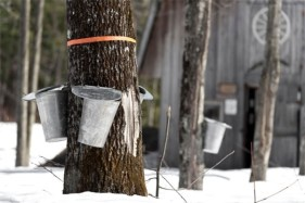maple-sugaring-2015-5cbd5438