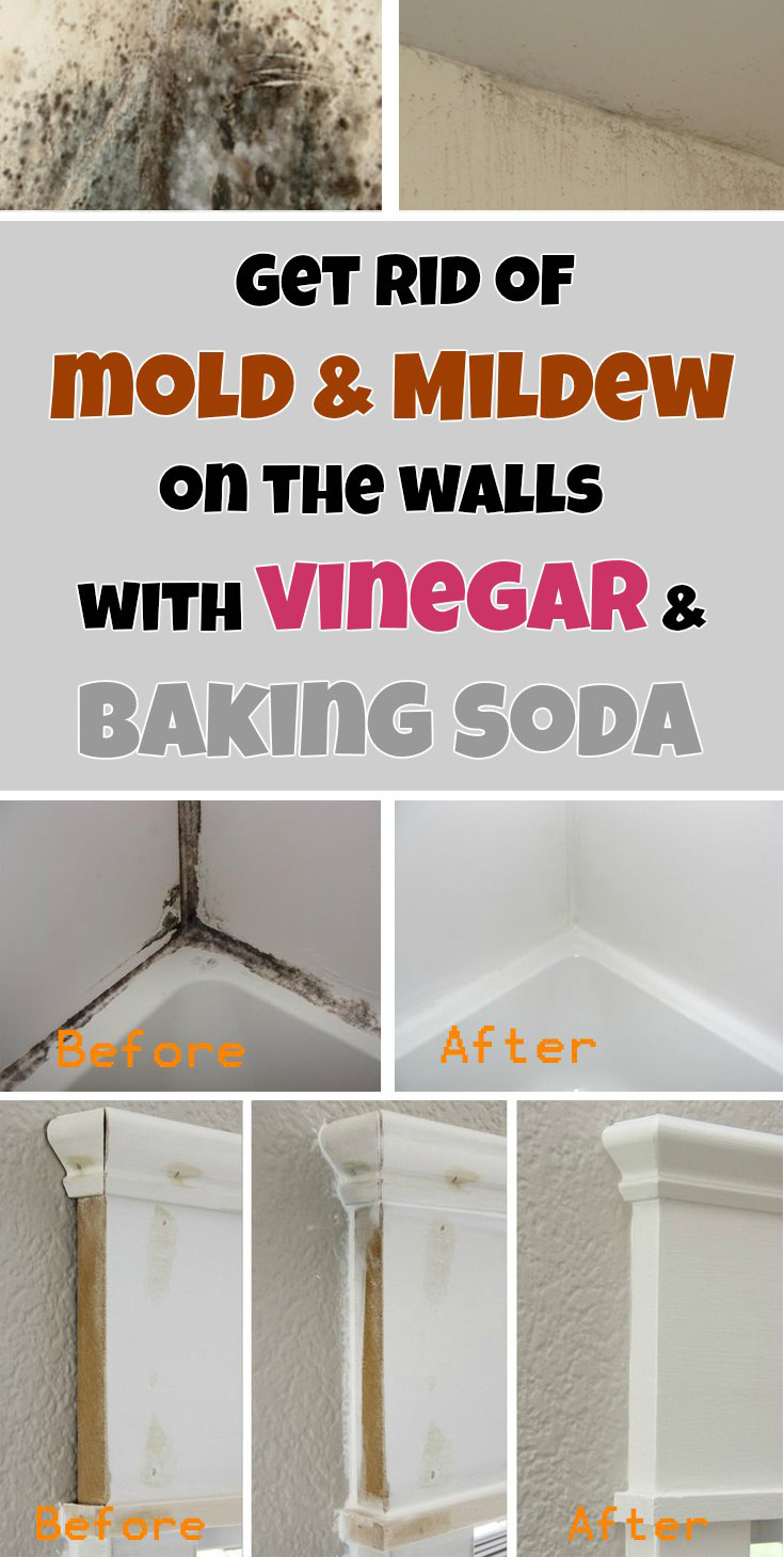 Get rid of mold  mildew on the walls with vinegar and