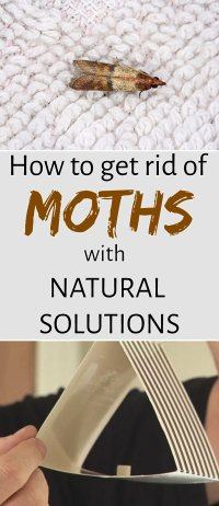 How To Get Rid Of Moths In Cupboard. Carpet Moths How To ...