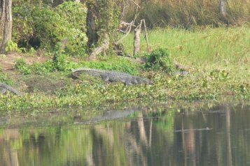 A Croc, too close for comfort!