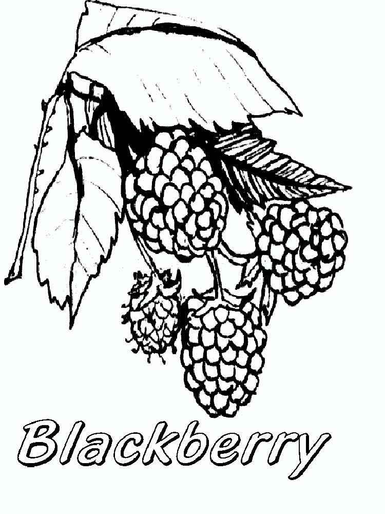 Blackberry coloring pages. Download and print Blackberry