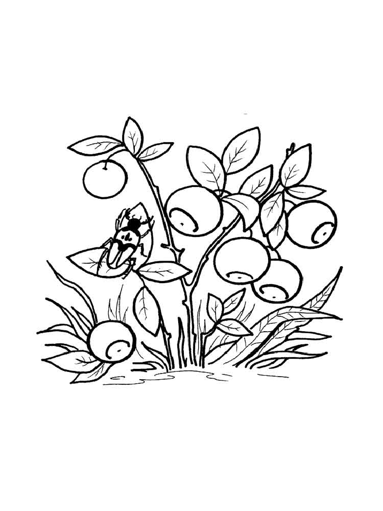 Blueberry coloring pages. Download and print Blueberry