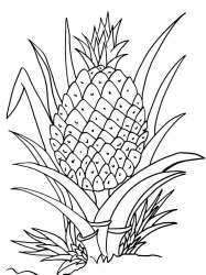 pineapple coloring pages plant clipart drawing printable cartoon fruit fruits cute line print cool2bkids colouring getdrawings sheets clipground adult upside