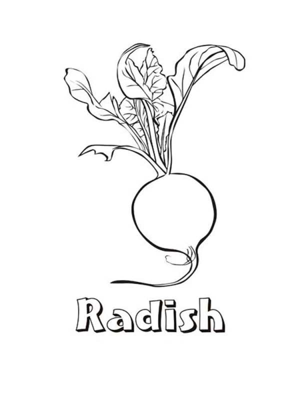 radish coloring pages
